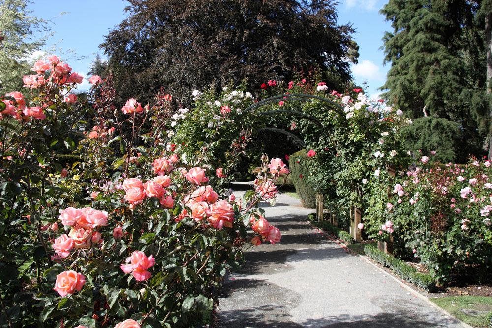 christchurch-botanic-gardens-new-zealand-rose-garden